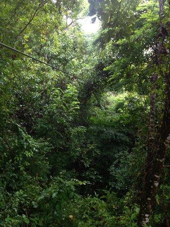 Hotel Punta Islita, Autograph Collection: El Canopy y el bosque.