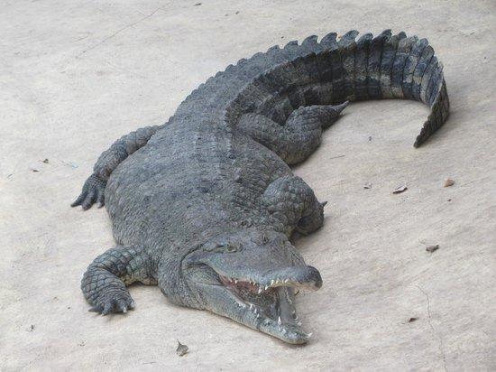 Ande, Francja: crocodile de la serre biotropica