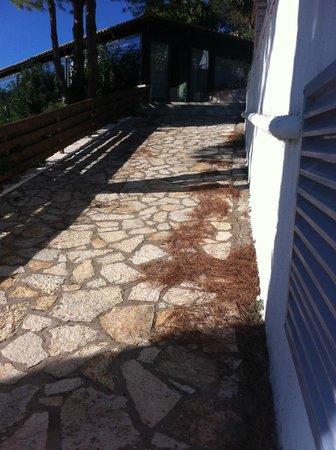 Domotel Agios Nikolaos: Pine needles everywhere