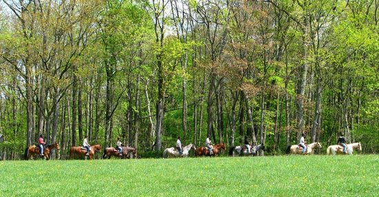 Vanderbeek Stables - Private Rides: Casual Trail Ride