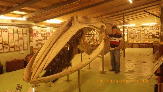 Museo del Mar: baleia