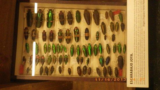 Museo del Mar: insetos