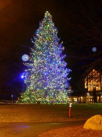 L.L. Bean Factory Store: the tree!