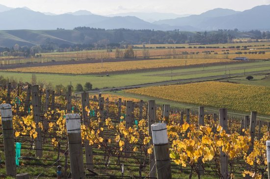 VinEssense Marlborough: The view from tasting room over Omaka Valley
