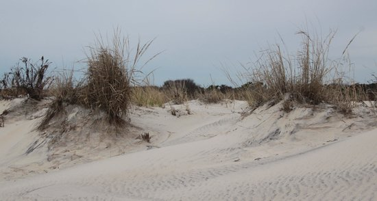 Chincoteague National Wildlife Refuge : no need to drive to the very end of the road