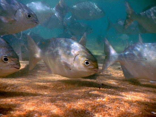 Dreams Huatulco Resort & Spa: peces de la paya tangolunda