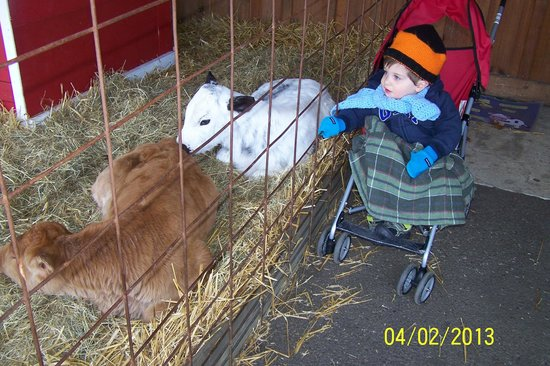 Linvilla Orchards: New born calves