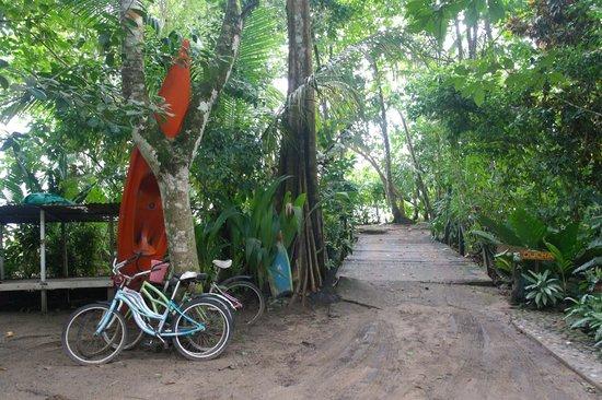 cabinas punta uva: Entrada y Salida hacia la Playa, un puente de madera tan solo nos separa de las playas
