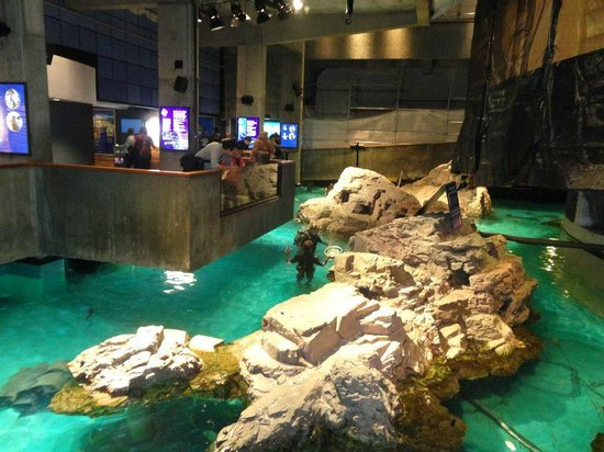 Main Room In The Aquarium Picture Of New England Aquarium Boston Tripadvisor