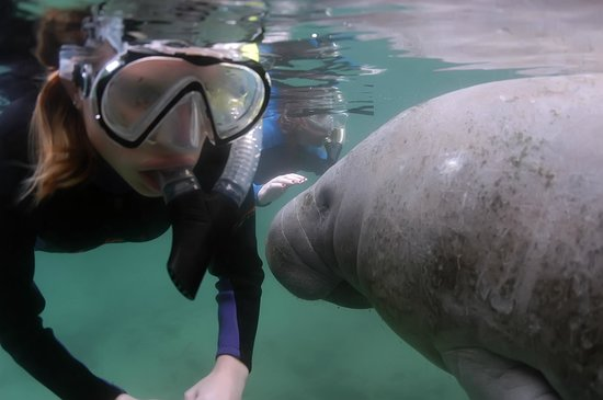 Fun 2 Dive Scuba, Snorkeling and Manatee Tours: One of my daughters and a calf.