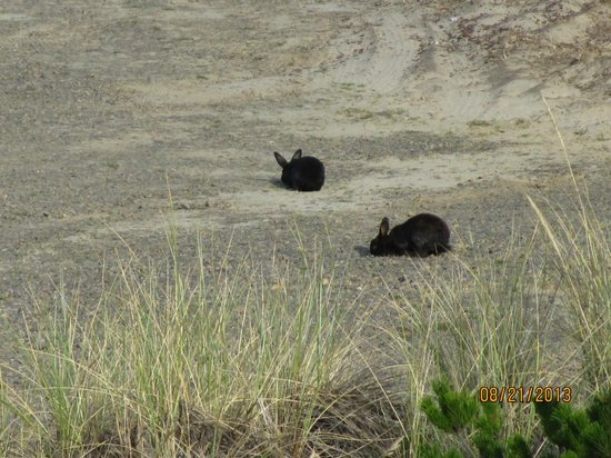 Inn At Cape Kiwanda: Local residents