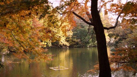 Kichijoji: 井の頭公園