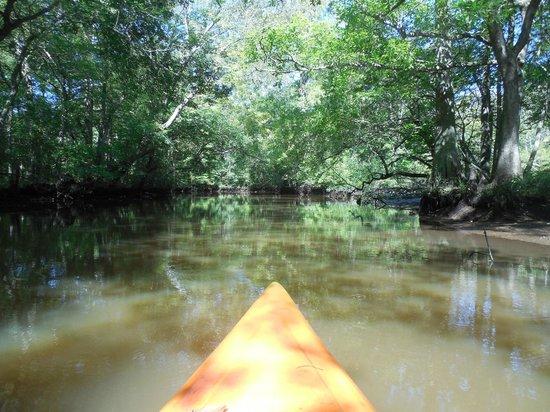 Pocomoke River Canoe Company: Kayaking on the narrow part of the Pocomoke River