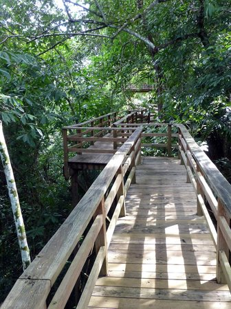 duPlooy's Jungle Lodge: The boardwalk high above the jungle
