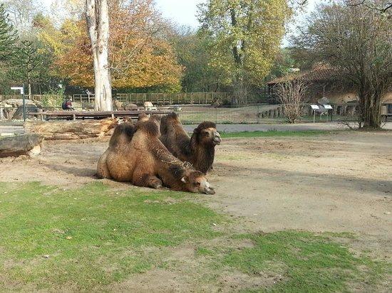 Krefeld Zoo: 16.11.13
