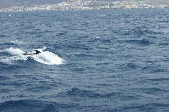 Shogun Boat Trip