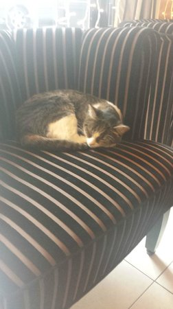 Hotel Eiffel Seine : Hotel Cat <3