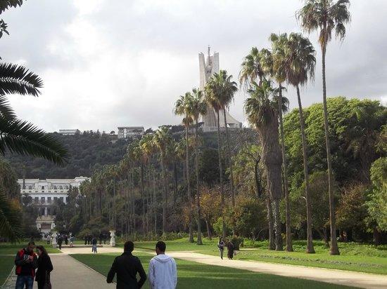Le Jardin d'Essai du Hamma : Allée centrale