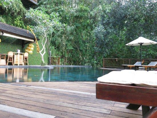 Nandini Bali Jungle Resort & Spa: Pool