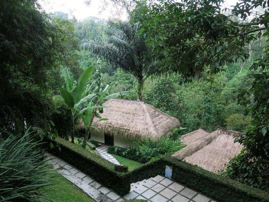 Nandini Bali Jungle Resort & Spa: View