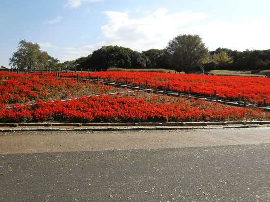 Flower Expo Memorial Park Tsurumi Ryokuchi: バラ園近くの花壇