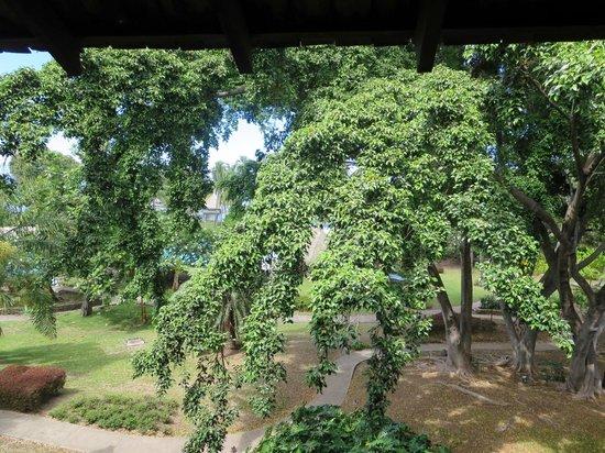 Le Meridien Tahiti: Aussicht in den Park