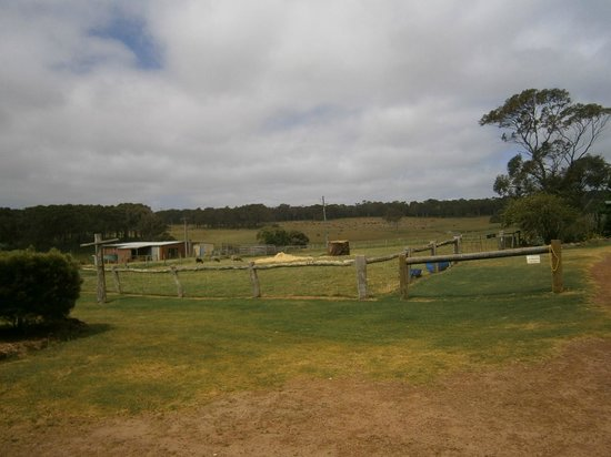 Sunflowers Farmstay: the view of the farm from the west room