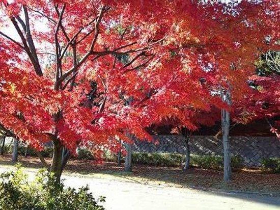 Kose Sports Park : 鮮やかな紅葉