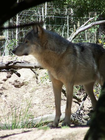 Kenilworth, South Africa: Tsitsikamma Wolf Sanctuary