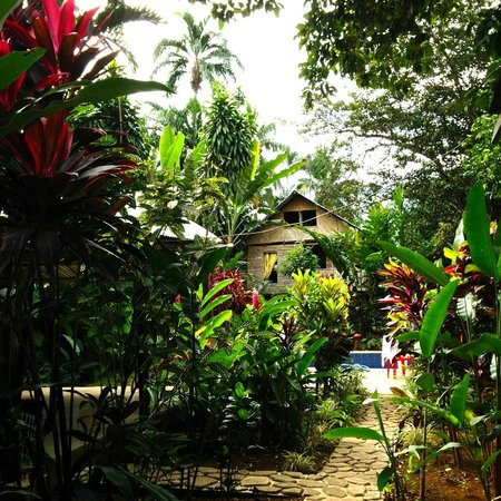 Bambu Hostel: View of the pool, bambu dorm, & garden.