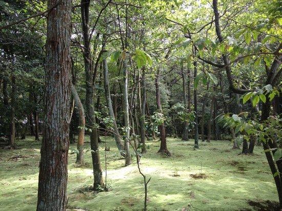 Akishinodera Temple: 苔庭もきれいです