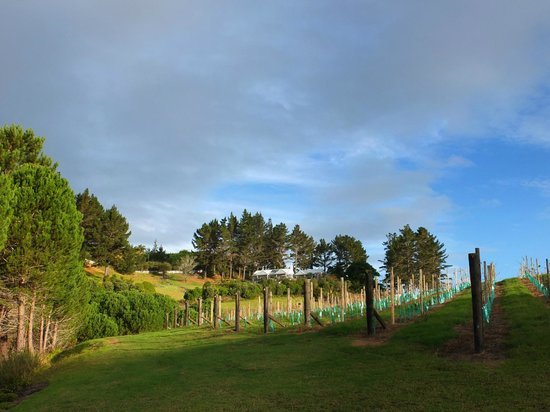 Paroa Bay Winery: Vineyard Cottage
