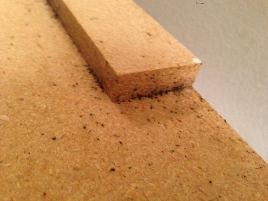 InTown Suites Plus: Bed Bug Feces on Back of Headboard (Floor 1)