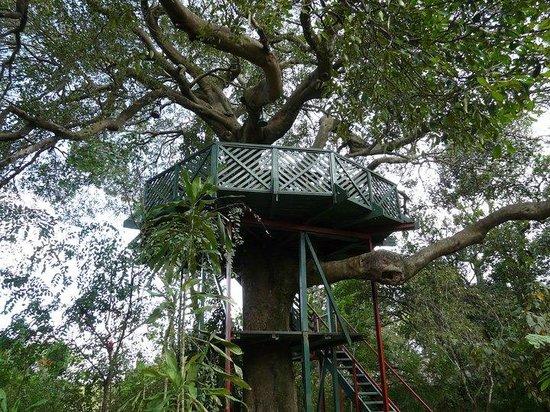 Fig Tree Camp: treehouse