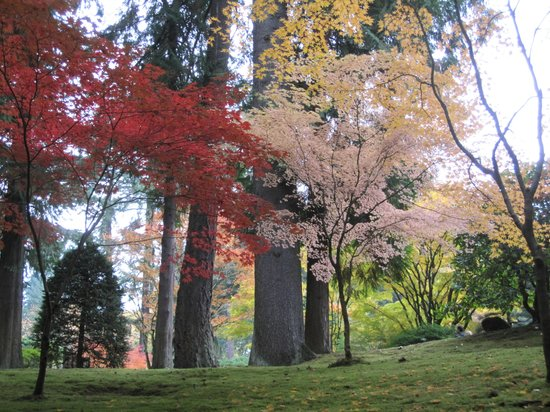 Portland Japanese Garden: One of the trees has leaves that turn almost pink.  The positioning of trees with varying colore