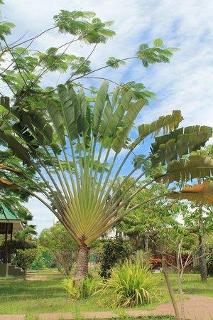 Self catering Ylang Ylang : Garden of Ylang Ylang