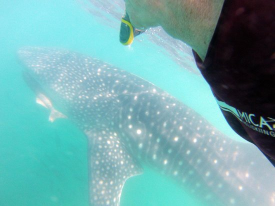 Cabo Adventures: That's me with the Whale Shark
