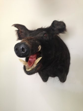 The Laughing Boar Guest House: THE GREETER