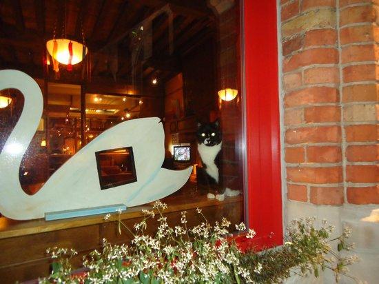 Hotel Salvators: окно отеля с площади