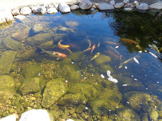 ‪ذا سيفارار إن: Beautiful fish pond.‬