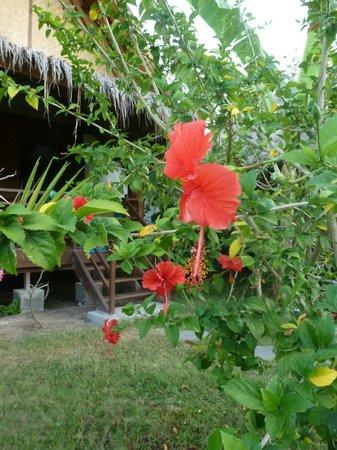 Adeng-Adeng Bungalows : gorgeous gardens