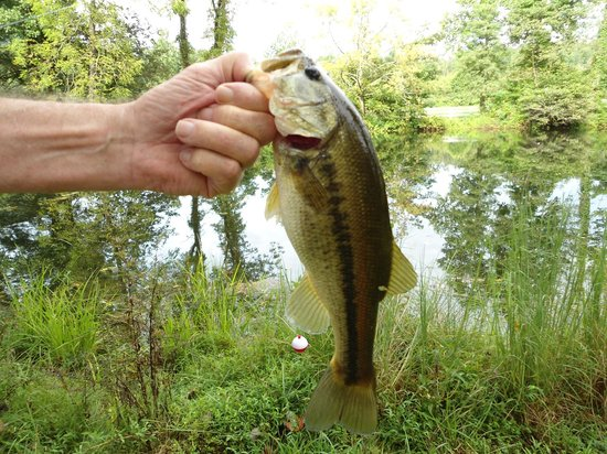 The Cub Motel : Nice Largemouth caught in the pond behind the Cub