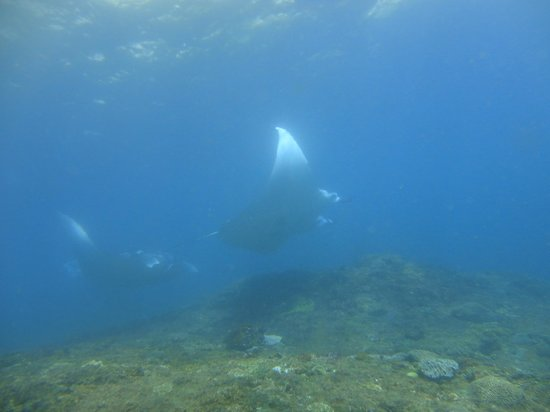 Atlantis International Bali : magique !