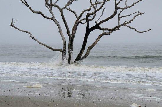 Botany Bay Plantation Heritage Preserve and Wildlife Management Area: Waves on tree