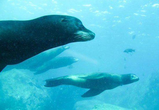 Cabo Pulmo Diving: Swimming with the Sea Lions