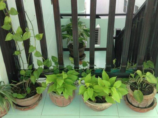 Top Garden Boutique Guesthouse: Decoración