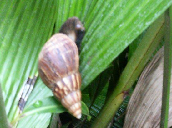 Paradise Bay Resort Hawaii: Snail at the Resort