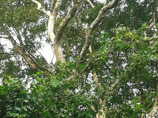 Cabinas Manzanillo : Forêt