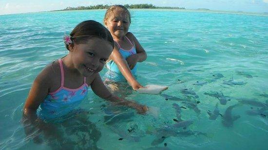 Aitutaki Lagoon Resort & Spa: our girls in the Lagoon feeding fish