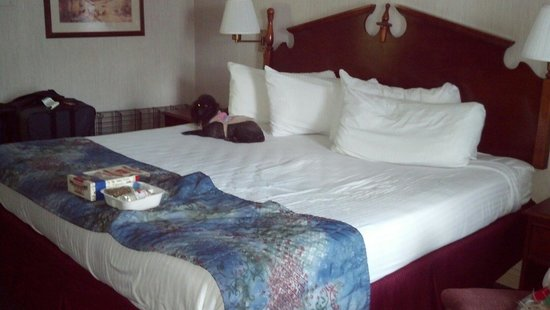 General Nelson Inn: King size room. Comfortable enough for our dogs